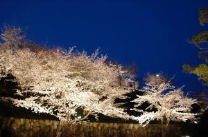 香川県桜の名所③「桃陵公園」