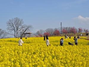 早春の花々を満喫!「国営讃岐まんのう公園 早春フェスタ」