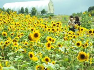 国営讃岐まんのう公園「サマーフェスタ」  ※7月20日(土) 若干空室あります