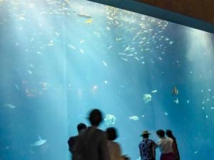 「四国水族館」で新しい体験プログラム始まる!!