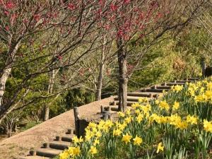 「善通寺五岳の里 市民集いの丘公園」で春のお花便り