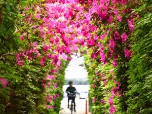 【仏生山公園】ピンク、紫、白のツツジが見頃♪ ツツジのトンネルがインスタ映えしそう♪