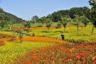 国営讃岐まんのう公園で秋を告げるコスモスフェスタ