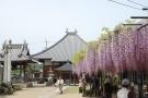 藤のお花の寺