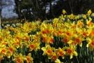 「国営讃岐まんのう公園」花らんまん♪春らんまん♪