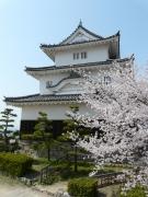 桜スポット①丸亀城