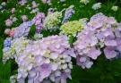 梅雨の時期は「四国村」で四季折々の花