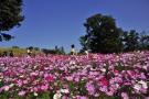 9月16日からまんのう公園にて「秋!色どりフェスタ」