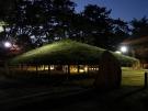 【中津万象園】日本の名松百選 「大傘松のライトアップ」開催中!
