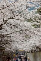 香川県桜の名所②「こんぴらさん」