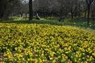 春らんまん♪花爛漫♪♪~国営讃岐まんのう公園~