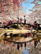 香川県桜の名所⑤「朝日山森林公園」