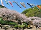香川の桜の名所⑦「不動の滝カントリーパーク」