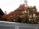 割烹ダイニング丸忠で紅葉