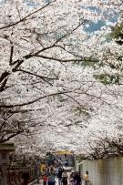 桜の名所「桜馬場(さくらのばば)」