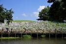 40品種2万本アジサイが園内を彩る「あじさいまつり」