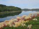 宝山湖の彼岸花 ※10月5日空室あります