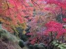 金刀比羅宮裏参道の紅葉が見頃♪  ※11月30日、12月7日空室あります。