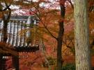 第81番札所「白峯寺」 の紅葉