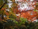 宝光寺の紅葉   ※12月7日(土)若干空室あります。