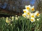 「国営讃岐まんのう公園」で春の訪れ  ※2月1日空室ございます。