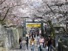 卒業旅行におすすめスポット 「金刀比羅宮」は桜の名所