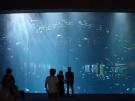 「四国水族館」に行ってきました♪