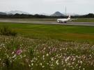【高松空港・さぬきこどもの国】秋の風物詩、コスモスが見頃でした