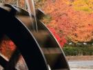 香川県の紅葉スポット②(香川用水記念公園)