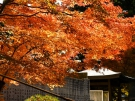 【雲辺寺】紅葉が見頃!「天空のブランコ」で絶景も堪能♪
