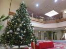 クリスマスツリーがロビーに登場!