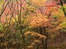 香川県の紅葉スポット 「満濃池森林公園」