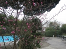 【花てらす庭園】春の訪れを告げる梅の花が咲き始めました
