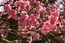 【特別名勝 栗林公園】春の訪れ♪梅が見頃を迎えていました!