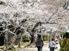 【栗林公園】見頃の桜が増えてきました♪