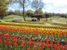 【国営讃岐まんのう公園】春らんまんフェスタ♪春のフラワーリレーを満喫♪
