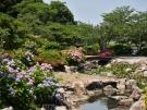 香川の穴場的・紫陽花スポット「やすらぎ公園」