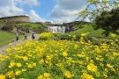 【国営讃岐まんのう公園】昇竜の滝前のキバナコスモスが見頃♪