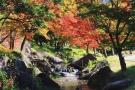 【香川の紅葉スポット】香川用水記念公園 ★流れる水と紅葉のコラボを撮影♪