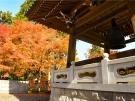 【紅葉スポット】四国霊場第66番札所「雲辺寺」