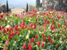 Sanuki Mannou Park - Spring Flowers' Festival !!