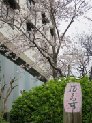 Famous spots of sakura blossom viewing ③