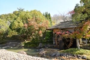 香川用水記念公園紅葉開始囉!