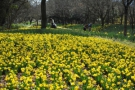 [期間限定]國營滿濃公園春季花展